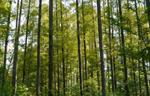 西安林地防护绿化6#-林地防护绿化